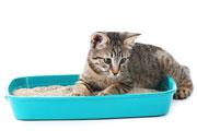 Areia para gatos