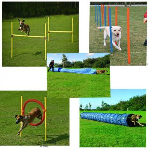 agility perros en casa