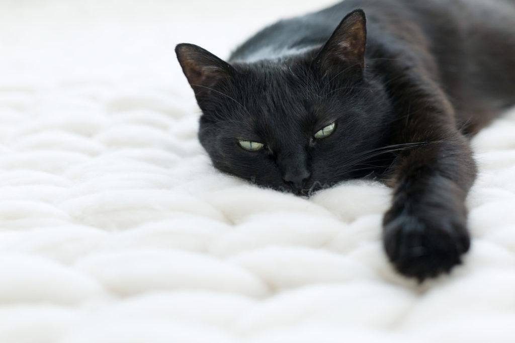 atemwegsprobleme bei katzen