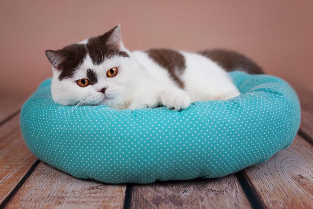 harnwegsinfekt bei katzen
