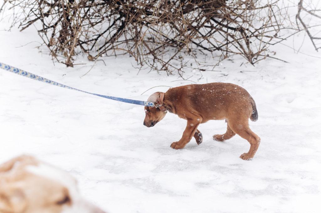 ängstlicher hund leine