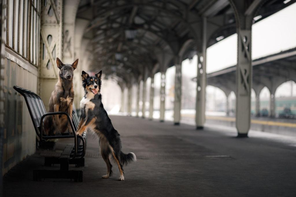urlaub zug hund