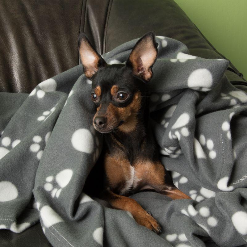 Ein Welpe liegt auf einer Hundedecke