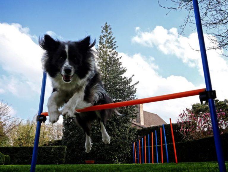 Agility con perro