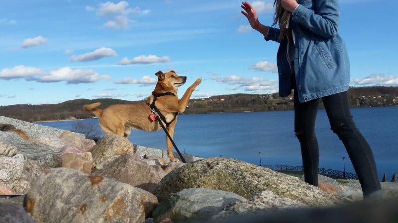 Ein Mensch geht mit seinem Hund an einem Ufer spazieren