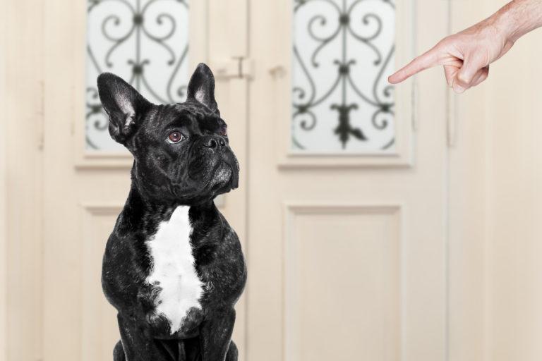 Perros desobedientes