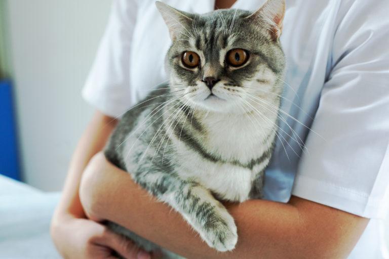 Katze vom Tierarzt