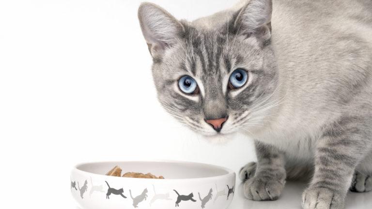 Alimentación para los gatos adultos