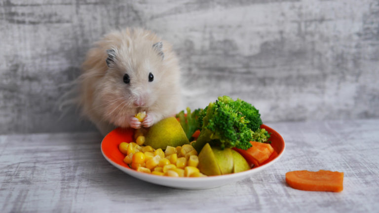 Alimentos crudos para roedores
