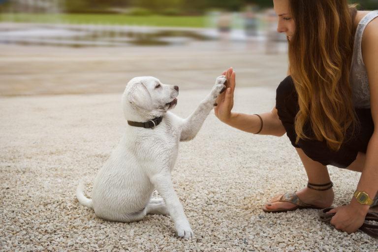 cómo adiestrar un cachorro