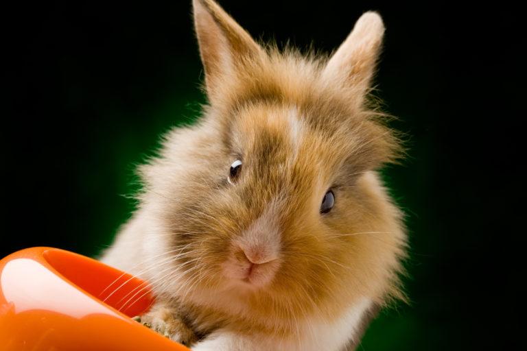 Comida adecuada para conejos