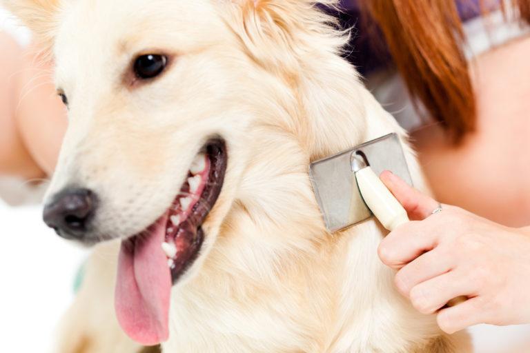 Los cuidados del pelaje de los perros