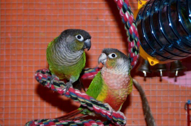 Juguetes de inteligencia para pájaros