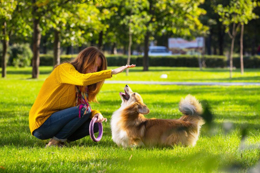 jugar con perro 1