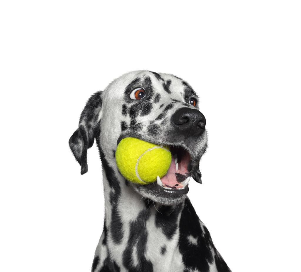 jugar con perro