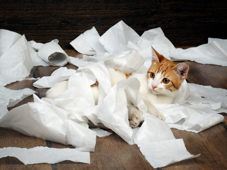 La falta de higiene de los gatos