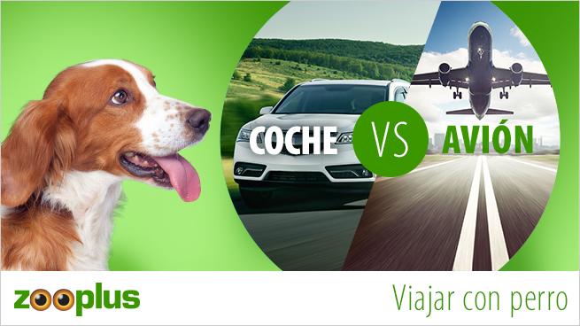 Viajar con perro en coche o en avión