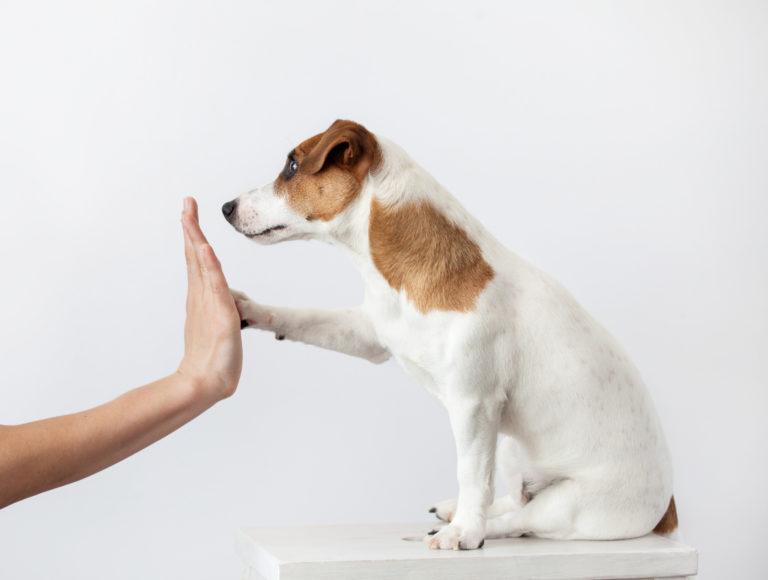 Socializar un cachorro
