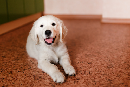 Cachorro solo en casa