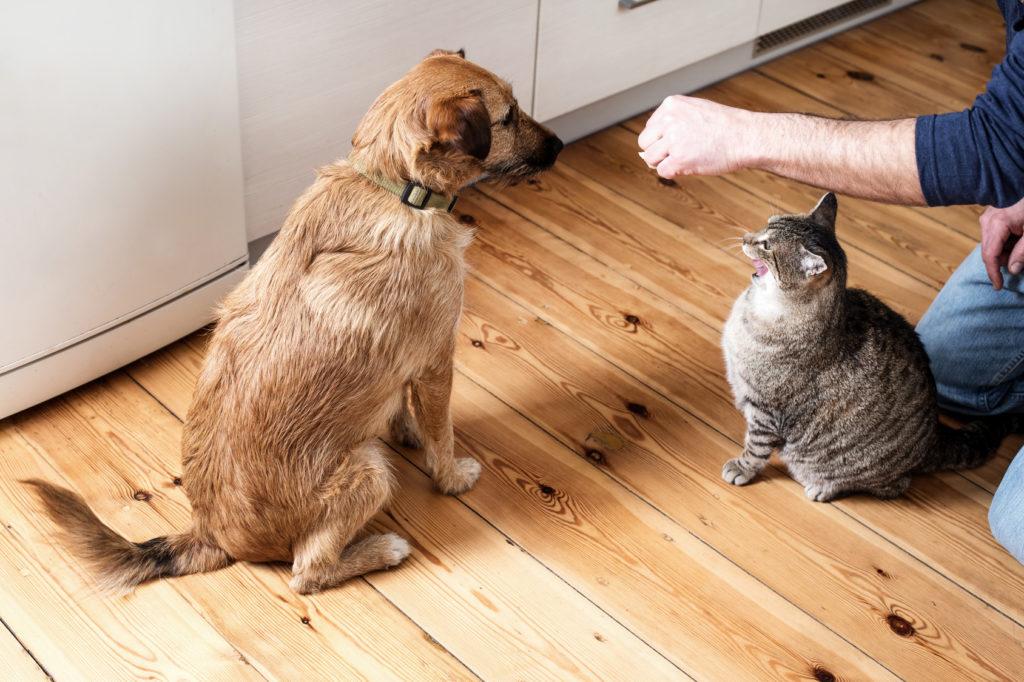 hund katze fressen