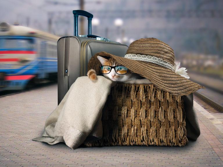 Viajar con gatos en tren