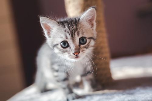 gatito macho o hembra