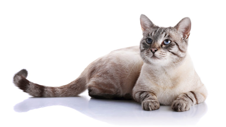 Kissan ehkäisy