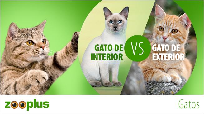 Gatos de interior o de exterior