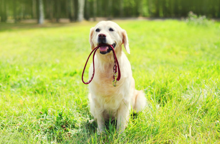 La correa adecuada para tu perro