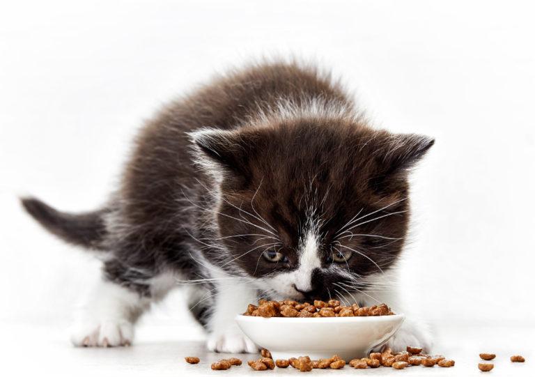 Alimentación de los gatitos