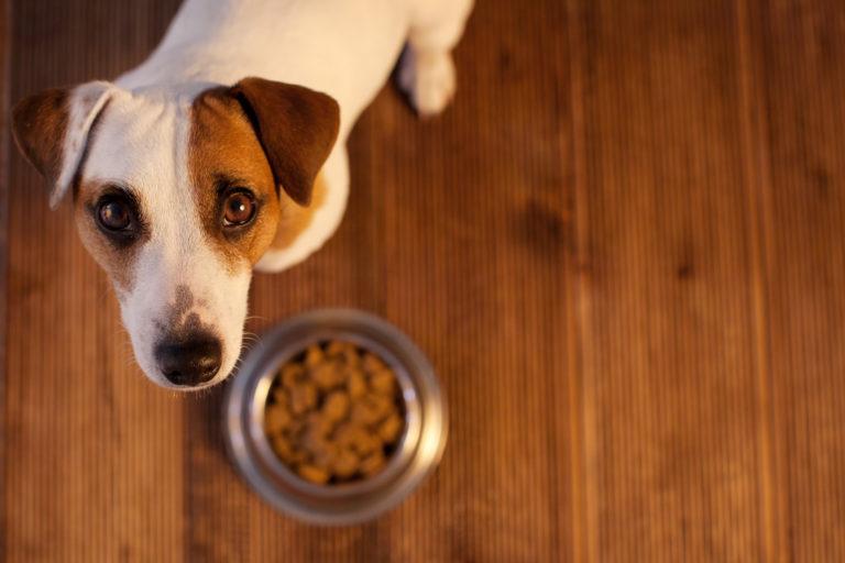 alergia alimentaria en perros
