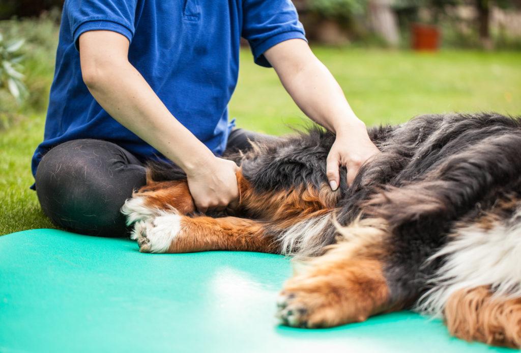 Unterstützende Physiotherapie bei Arthrose