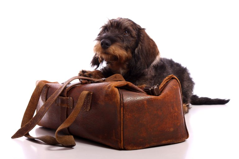 VIajar con perros: el mareo en los perros