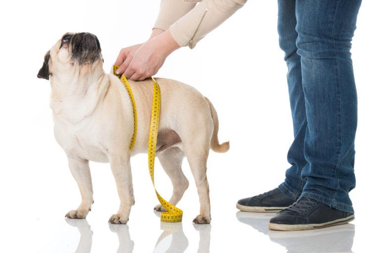 Comida para perros con sobrepeso
