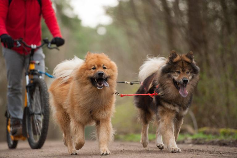 En bici con perro