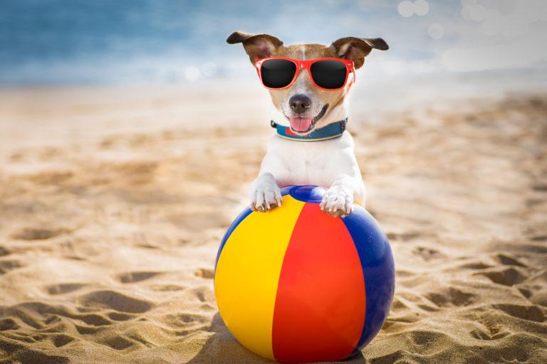 Accesorios para perros en verano