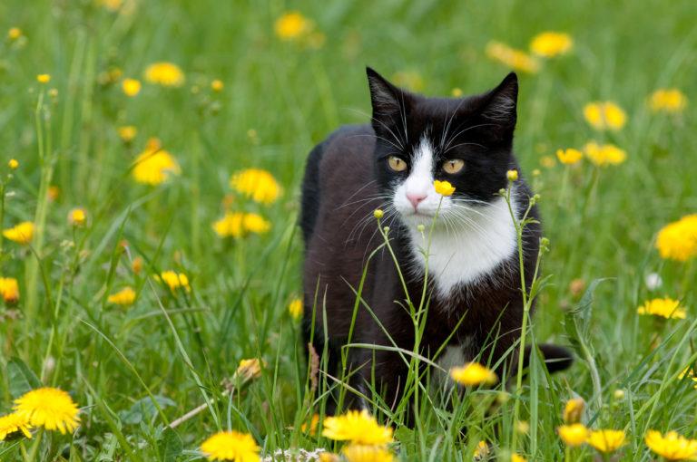 Parásitos en gatos: pulgas y garrapatas
