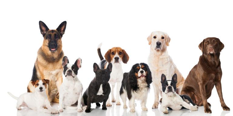 Comida para perros de raza