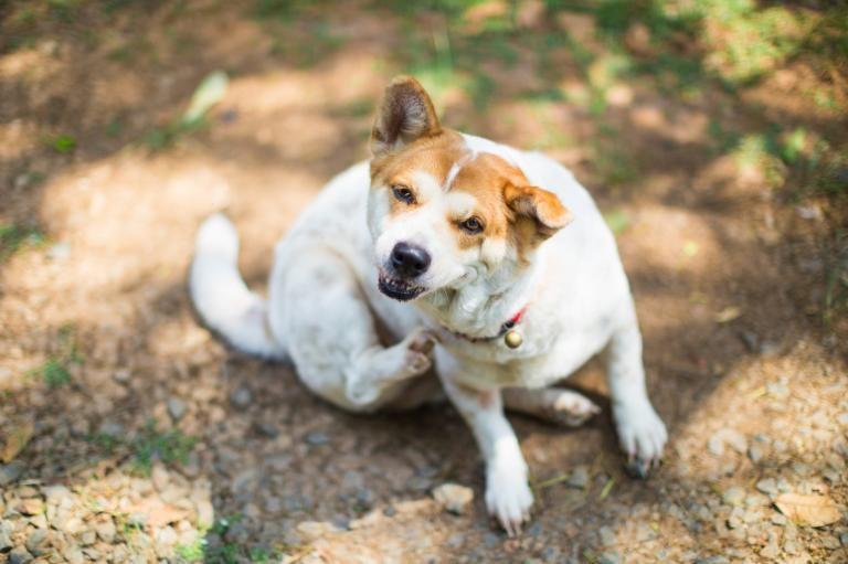 Como quitarse la alergia a los perros