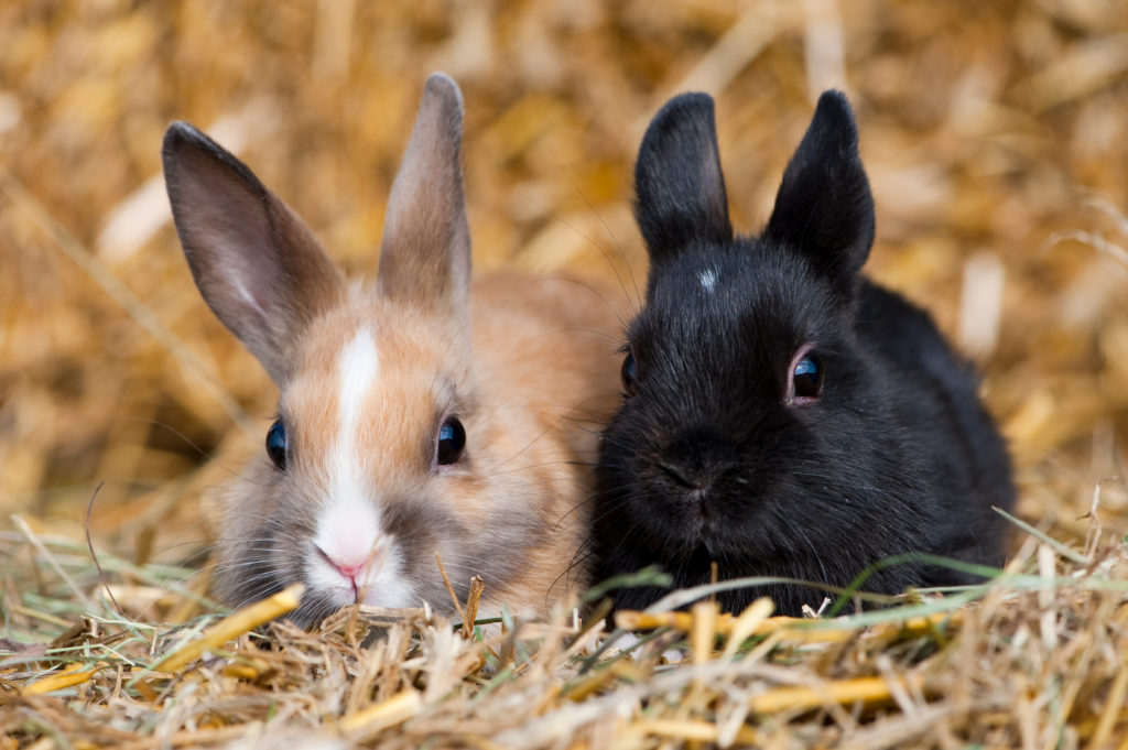 Zwei kleine Kaninchen