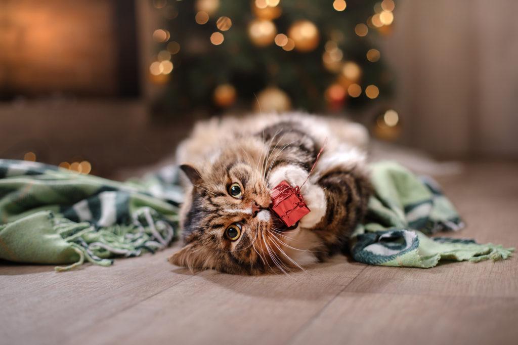 kissa leikkii lahjanarulla