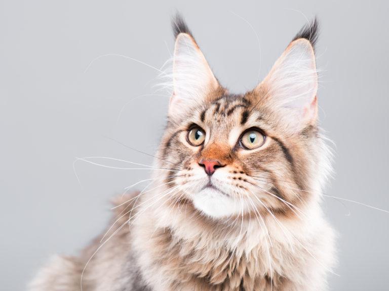 La edad de los gatos