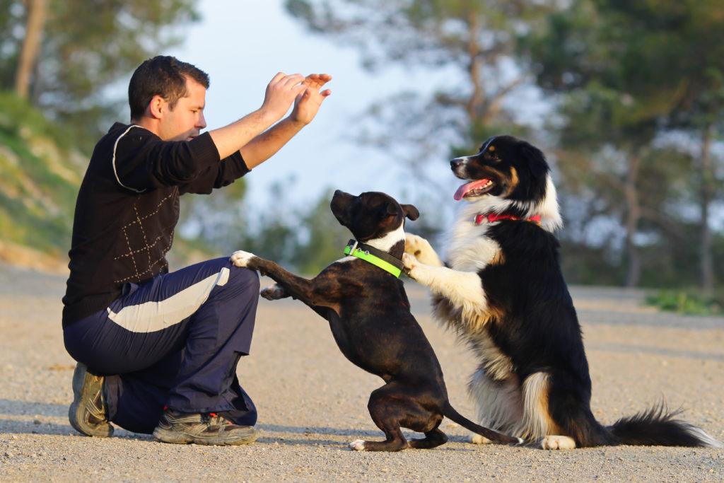 hundetrainer mit zwei hunde