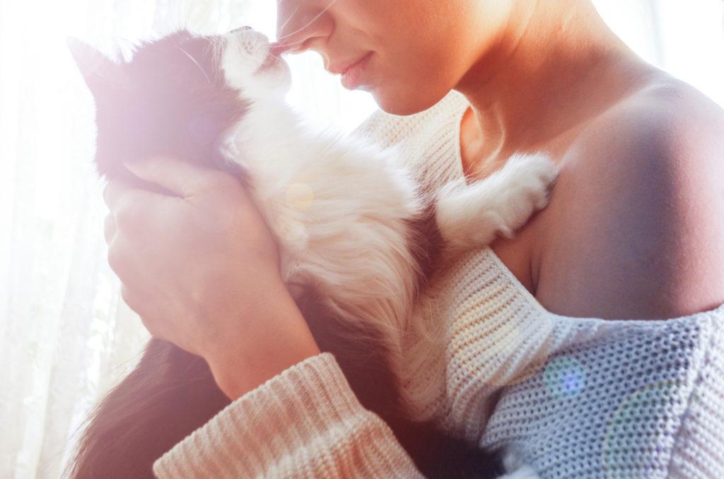 La toxoplasmosi nel gatto