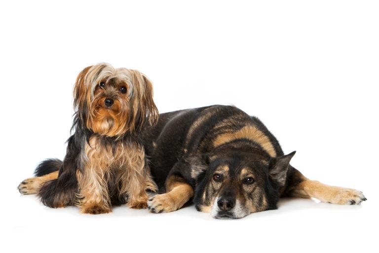 dos perros en casa