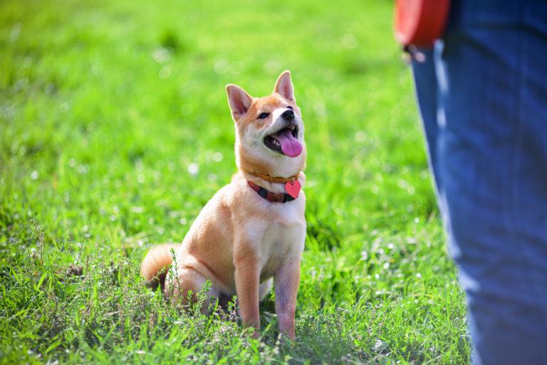 Cómo educar a mi perro: obediencia básica