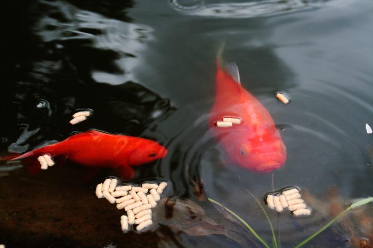 Comida para peces de estanque