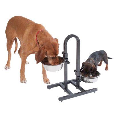 la llegada de un cachorro