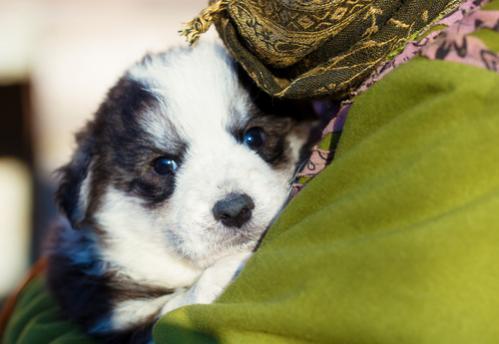 Cómo adoptar cachorros de una protectora de animales