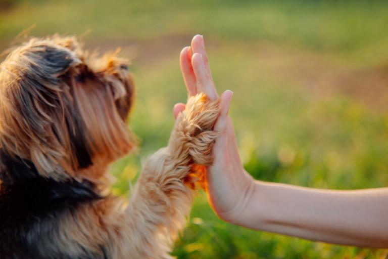 cómo operar un perro con cáncer de próstata